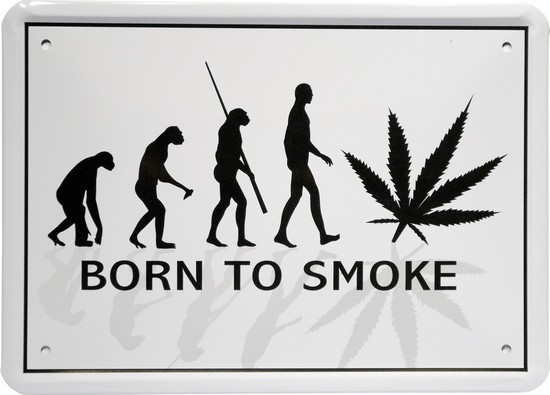 "Blechschild 15 x 21 cm ""Evolution Cannabis"""
